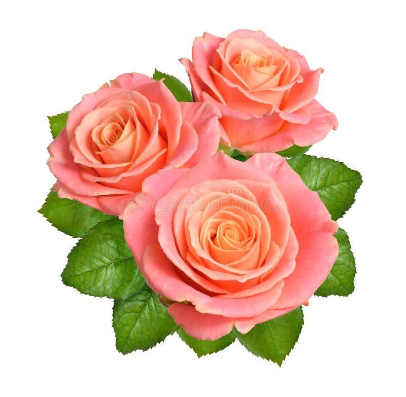 Composição de flores cor-de-rosa das rosas Isolado no fundo branco foto de stock royalty free