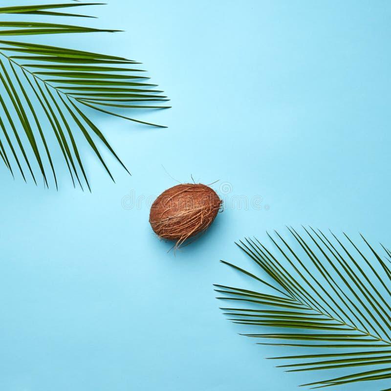 Composição de folhas de palmeira verdes e coco orgânico em um fundo azul com espaço para o texto A porca tropical liso imagem de stock