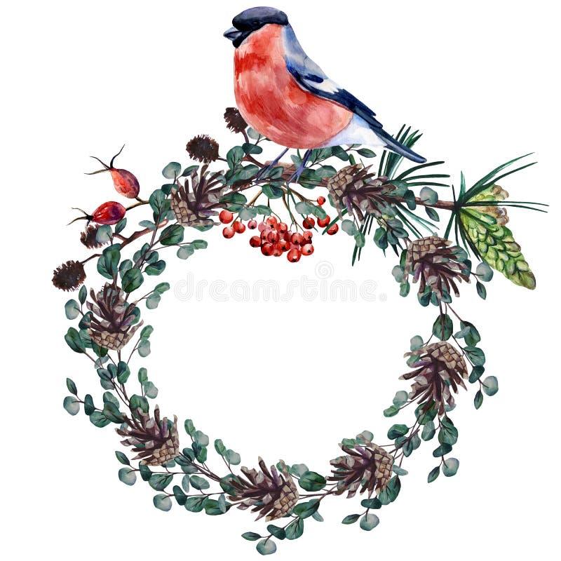 Composição de inverno com toucinho e coroa de cones e ramos de eucalipto, rosa-quadril, alder, pinheiro e rowan Pintura de recort fotografia de stock