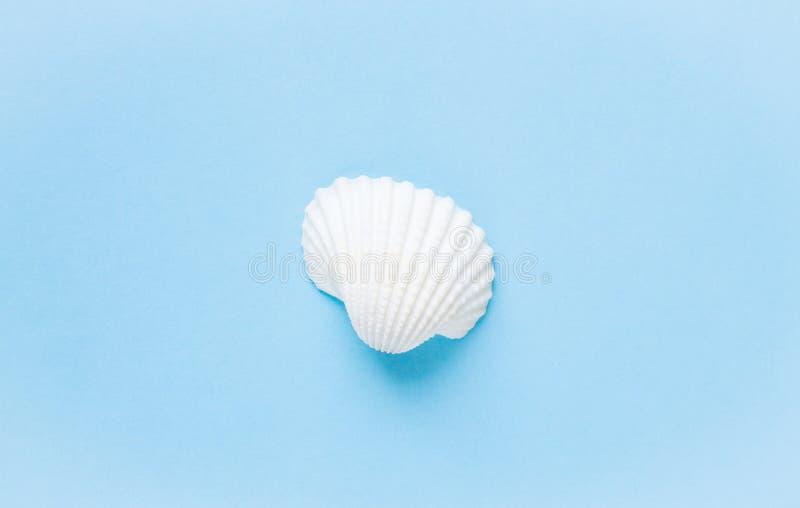 Composição de shell exóticos do mar em um fundo azul Conceito do verão imagens de stock royalty free