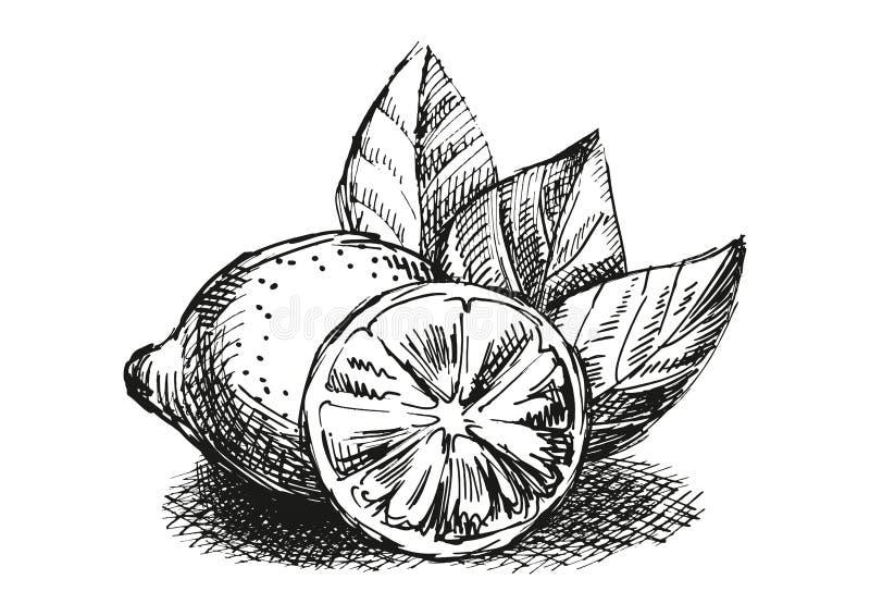 Composição do esboço com limão foto de stock
