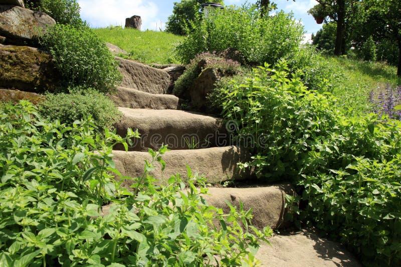Composição do jardim com as escadas velhas do arenito e as ervas aromáticas foto de stock royalty free