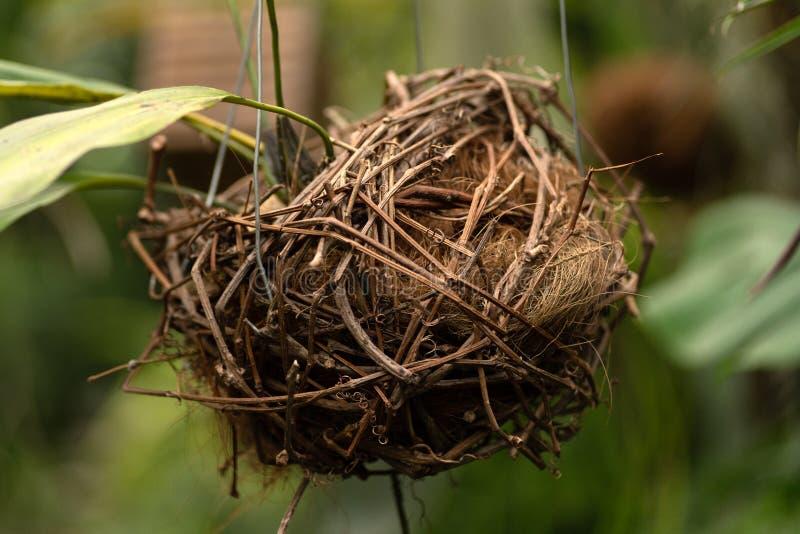 Composição do ninho do pássaro no fundo das plantas fotos de stock royalty free