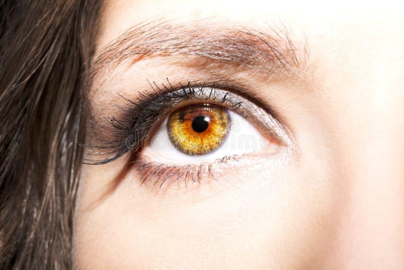 Composição do olho Os olhos bonitos compõem o detalhe, extensão da pestana fotos de stock royalty free