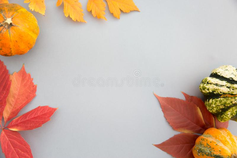 Composição do outono Abóboras, folhas no fundo cinzento pastel outono, queda, conceito de Dia das Bruxas Configuração lisa, vista foto de stock