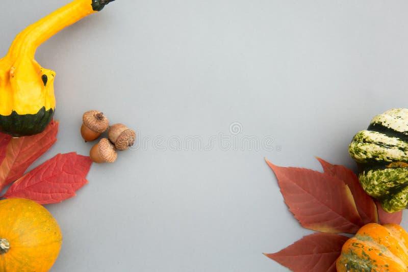 Composição do outono Abóboras, folhas no fundo cinzento pastel outono, queda, conceito de Dia das Bruxas Configuração lisa, vista imagens de stock