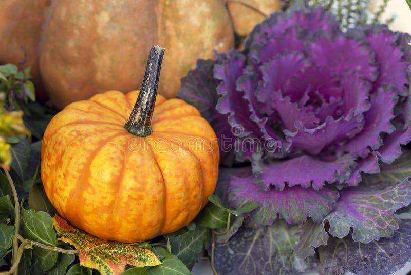 Composição do outono com uma abóbora diminuta e uma couve vermelha fotografia de stock royalty free