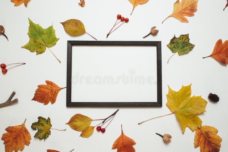 Composição do outono, configuração lisa Quadro de madeira da foto com as folhas de outono frescas no fundo branco com opinião sup foto de stock