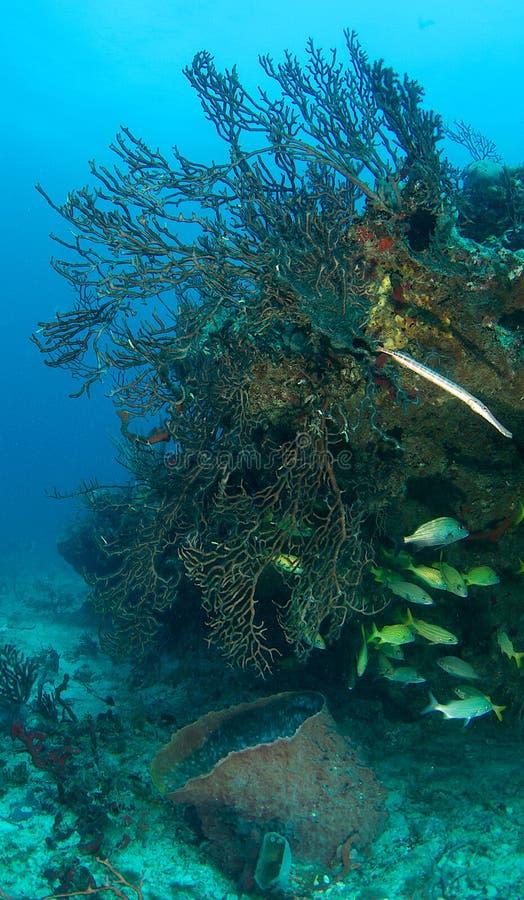 Composição do recife coral com peixes foto de stock