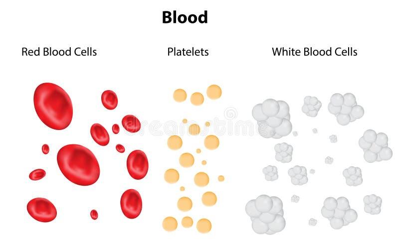 Composição do sangue ilustração do vetor