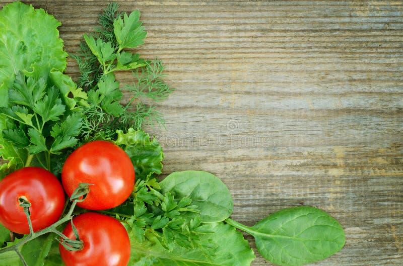 Composição do tomate com alface, salsa, aneto  imagens de stock royalty free