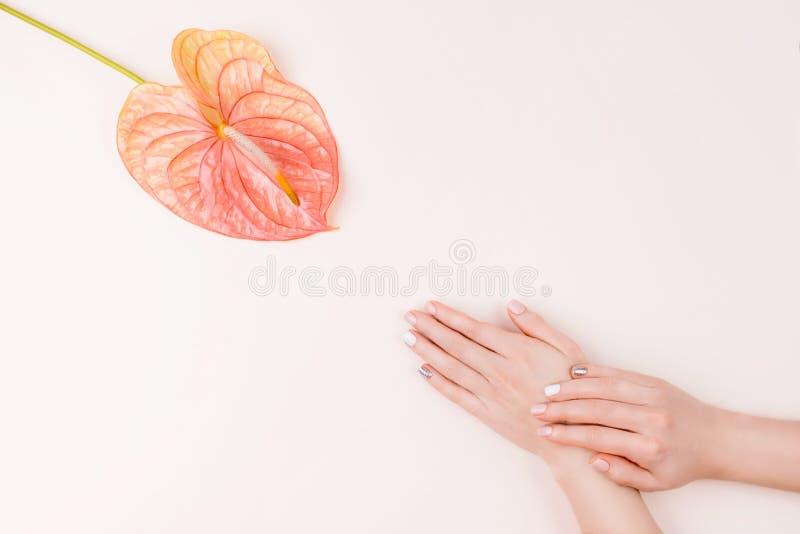 Composição do tratamento de mãos e da flor imagem de stock royalty free
