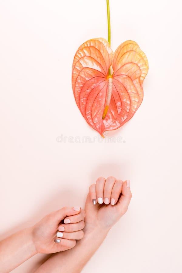 Composição do tratamento de mãos e da flor imagem de stock