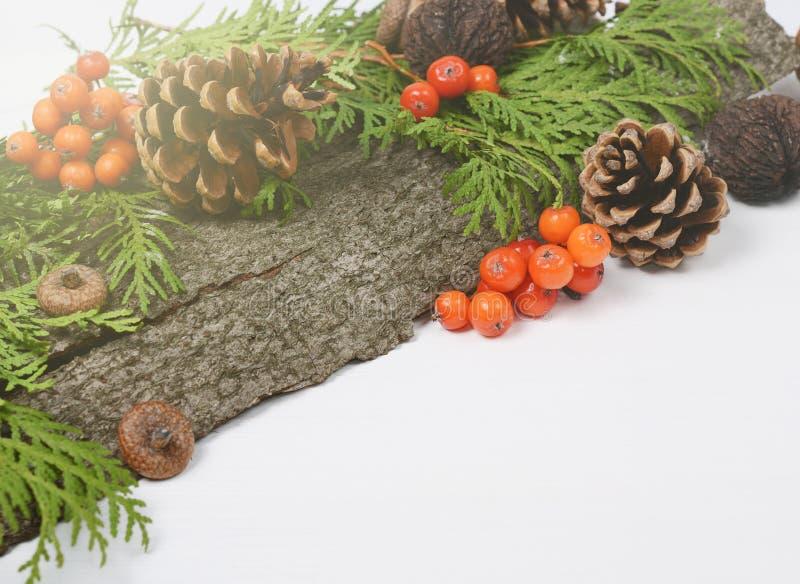 A composição dos feriados do Natal dos cones, bagas de Rowan, thuja verde ramifica Fundo sazonal do inverno com espaço para imagem de stock royalty free