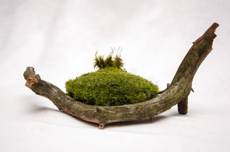 A composição dos presentes da floresta fotos de stock