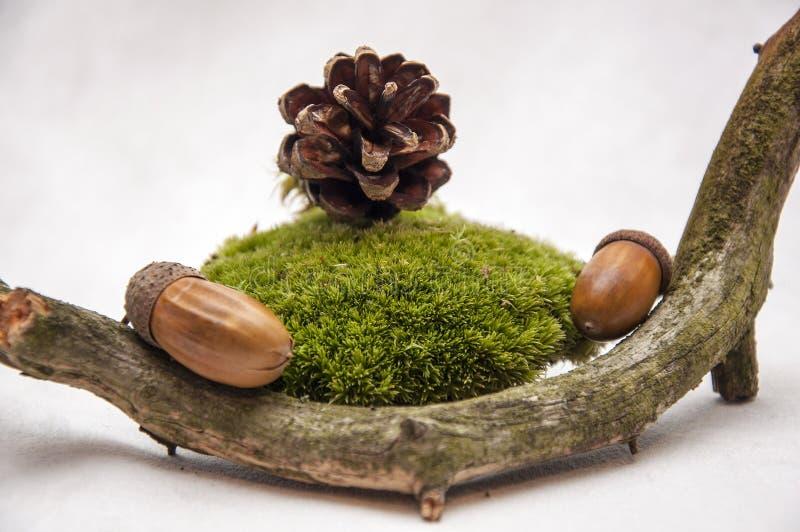 A composição dos presentes da floresta foto de stock royalty free