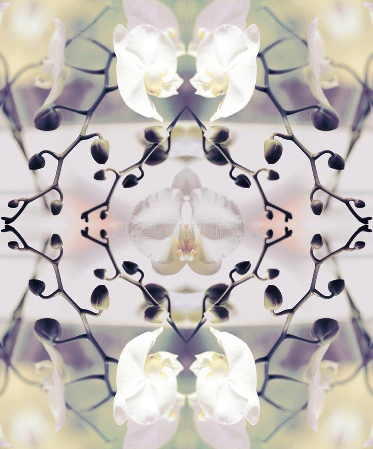 Composição estilizado do gráfico da orquídea da arte imagem de stock