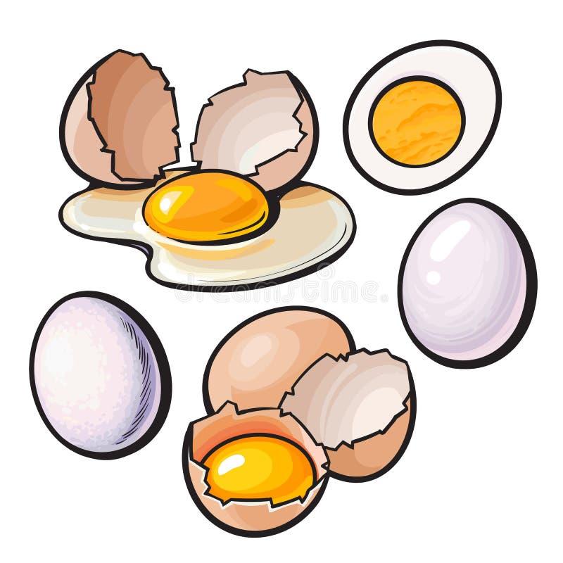 Composição inteira e rachada, quebrada do ovo da galinha do shell ilustração stock