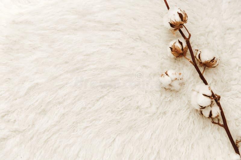 Composição lisa da configuração com algodão Conceito do Blogger imagens de stock royalty free