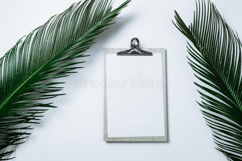 A composição mínima com prancheta e a palma verde saem no branco fotos de stock