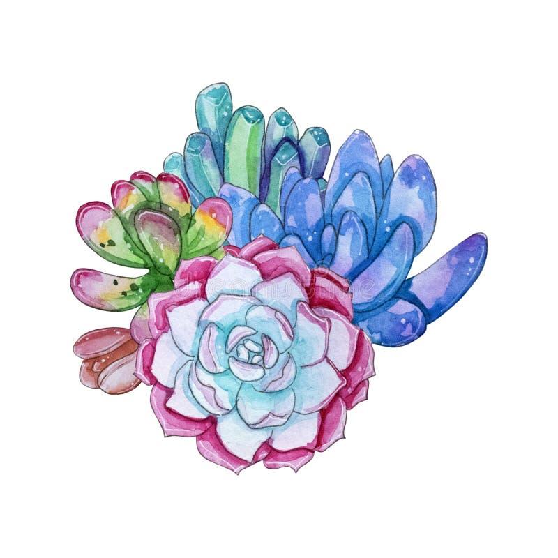 Composição suculento handpainted da planta da aquarela ilustração royalty free