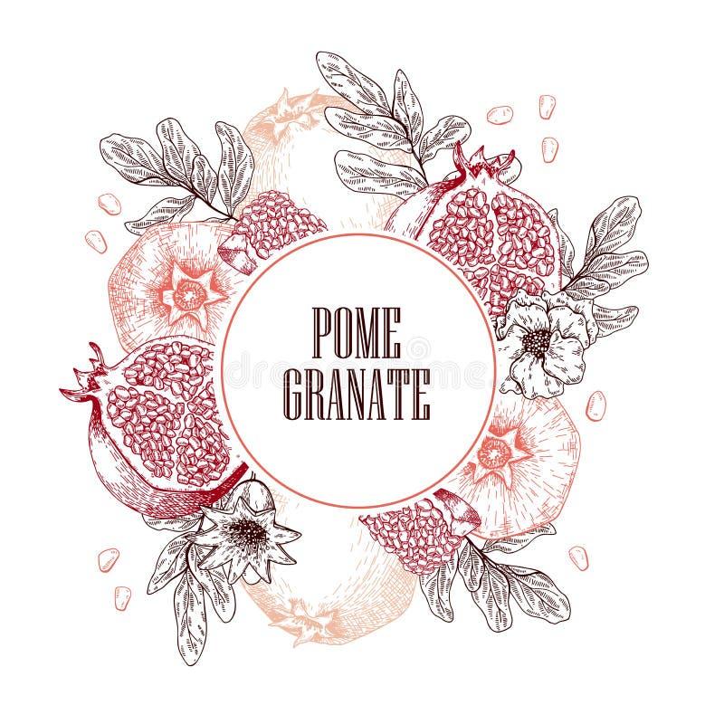 Composição tirada mão da romã Ilustração gravada vetor Fruto natural suculento Ingrediente saudável do alimento para ilustração stock