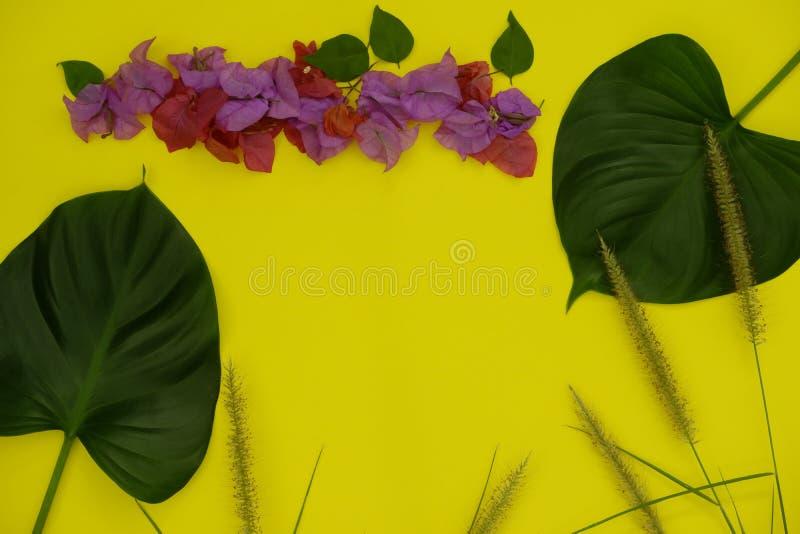 Composição tropical Quadro feito das folhas e das flores no fundo amarelo, configuração lisa imagens de stock