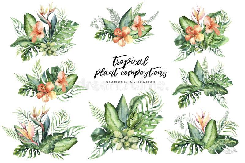 Composição tropical tirada mão do ramalhete da flor da aquarela Folhas de palmeira exóticas, árvore da selva, Botânica do trópico ilustração stock