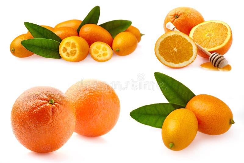Composições dos citrinos isoladas no fundo branco Laranja, kumquat coleção - Imagem foto de stock