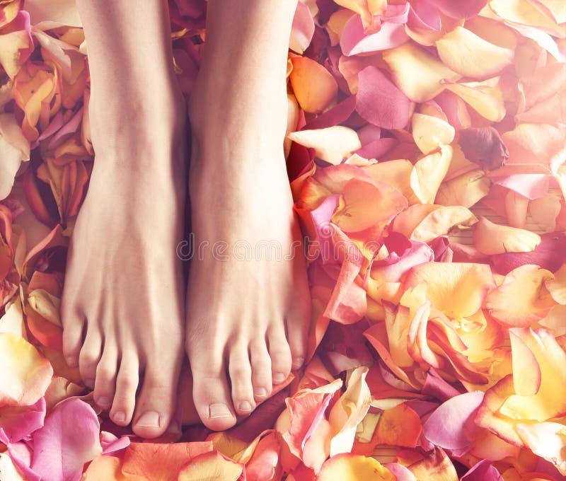 Composições dos termas dos pés e das pétalas fêmeas 'sexy' fotos de stock