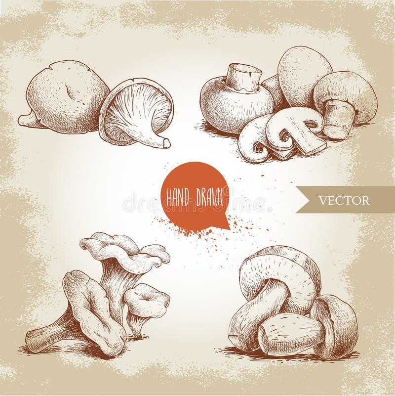 Composições tiradas mão dos cogumelos do estilo do esboço ajustadas O cogumelo com cortes, ostras, primas e porcini cresce rapida ilustração stock