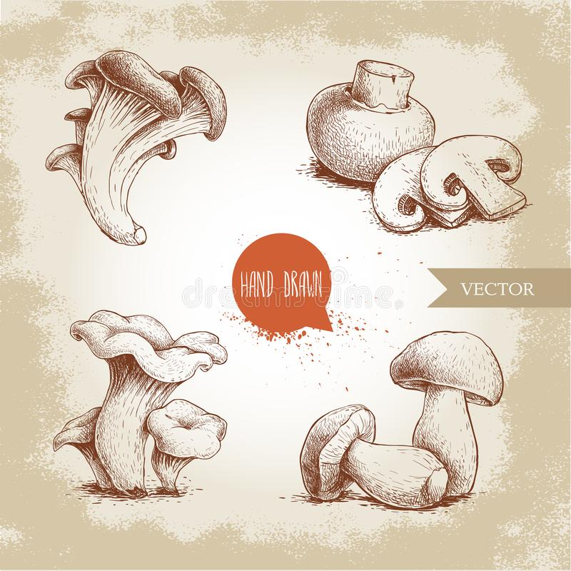 Composições tiradas mão dos cogumelos do estilo do esboço ajustadas O cogumelo com cortes, ostras, primas e porcini cresce rapida ilustração do vetor