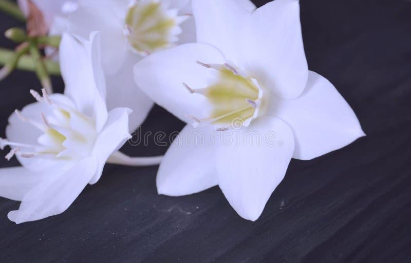 A composi??o das flores Flores brancas fotos de stock royalty free