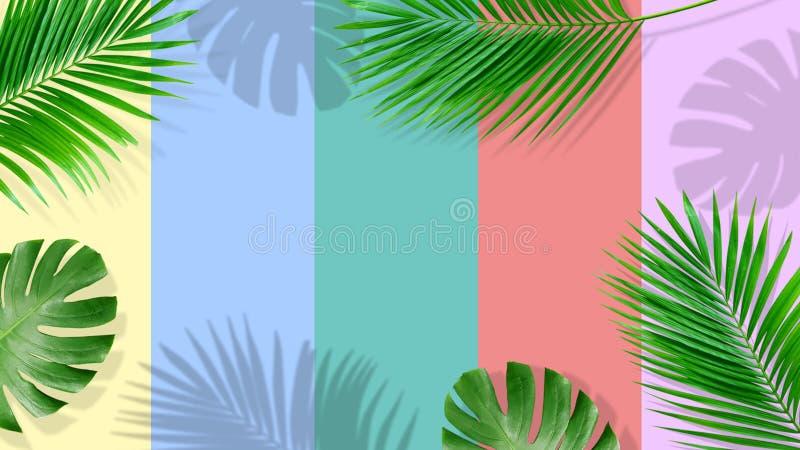 Composi??o do ver?o Folhas de palmeira tropicais no fundo amarelo ver?o foto de stock royalty free