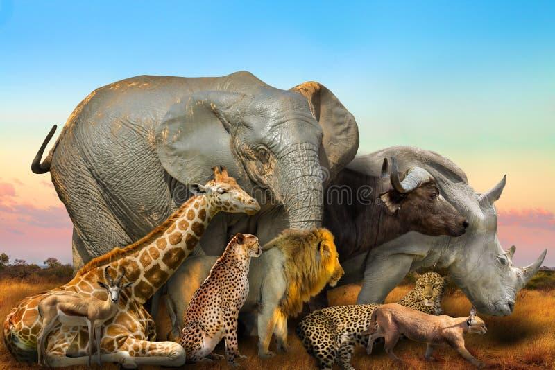 Composición africana salvaje de los animales fotografía de archivo
