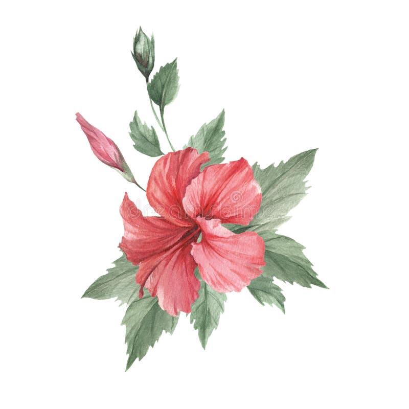 Composición con el hibisco Ejemplo de la acuarela del drenaje de la mano libre illustration