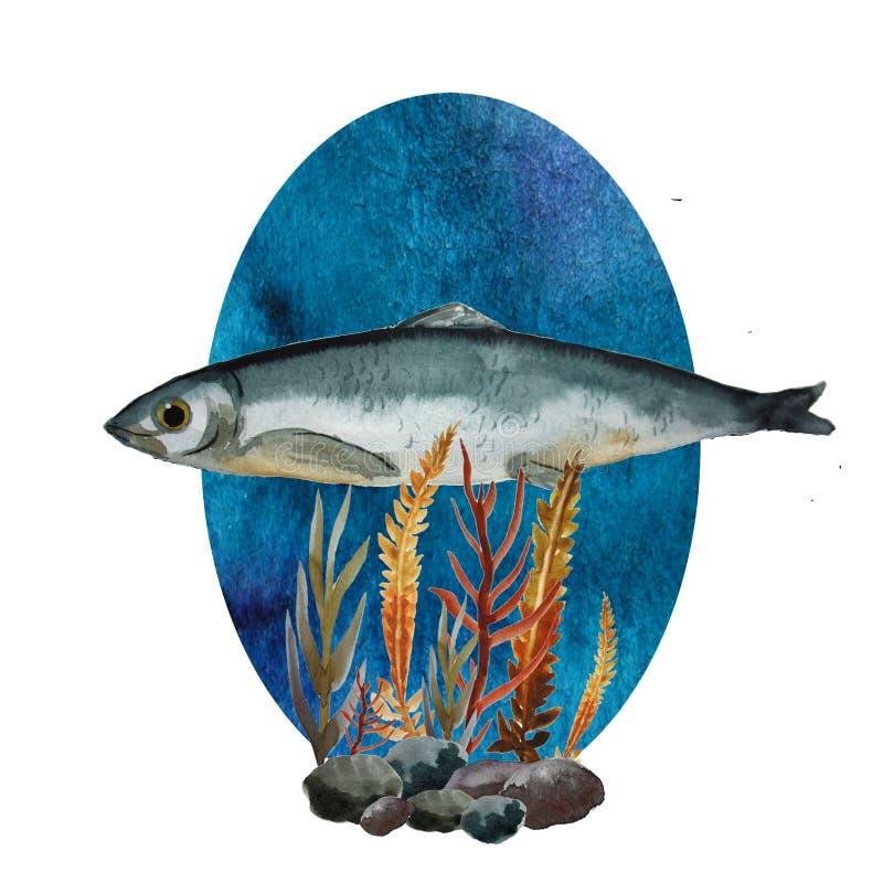 Composición con los arenques stock de ilustración