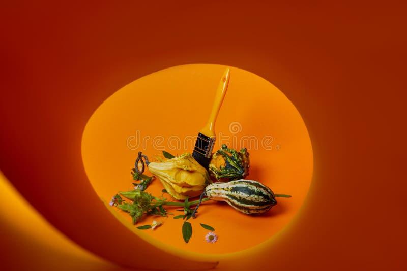 Composición creativa del otoño con diversas calabazas decorativas fotos de archivo libres de regalías