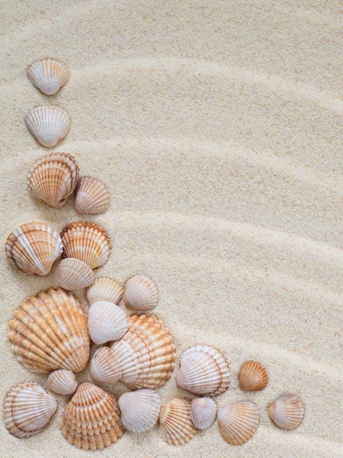 Composición de conchas marinas imagenes de archivo
