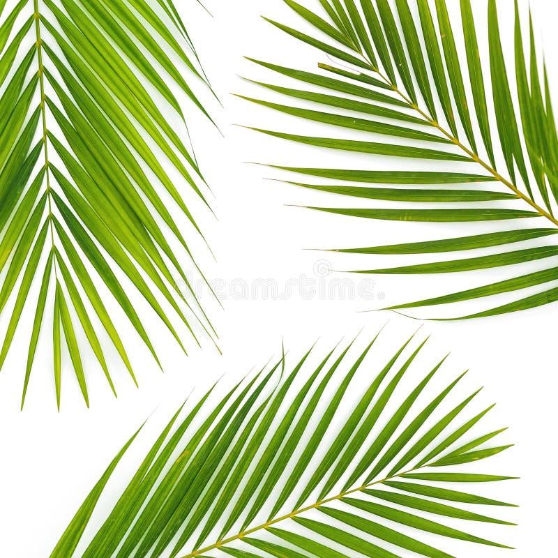 Composición de hojas de palma tropicales en el fondo blanco Endecha plana, visión superior fotos de archivo