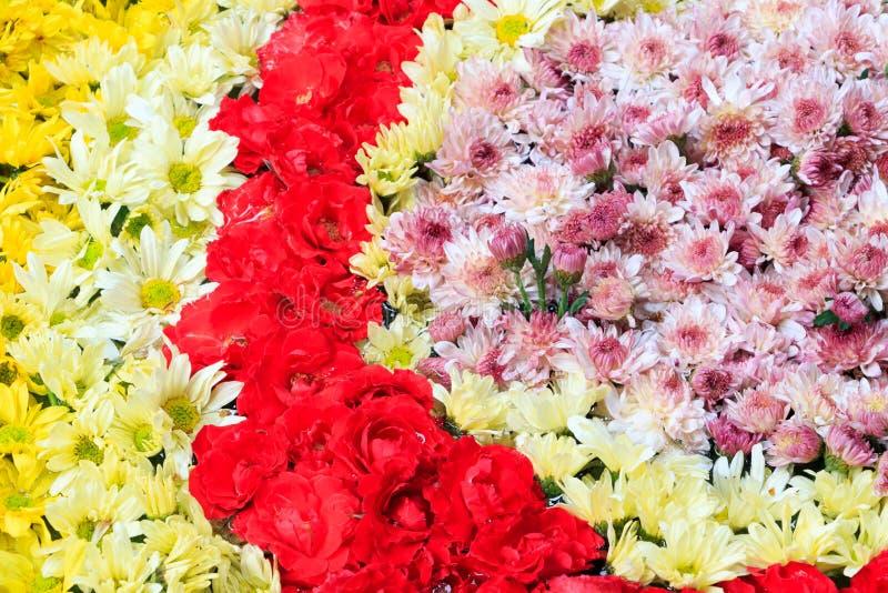 Composición de la flor con las rosas y el fondo del crisantemo imagen de archivo libre de regalías