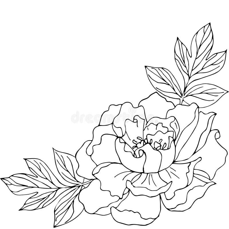 Composición de la flor Peonía blanco y negro Aislado ilustración del vector