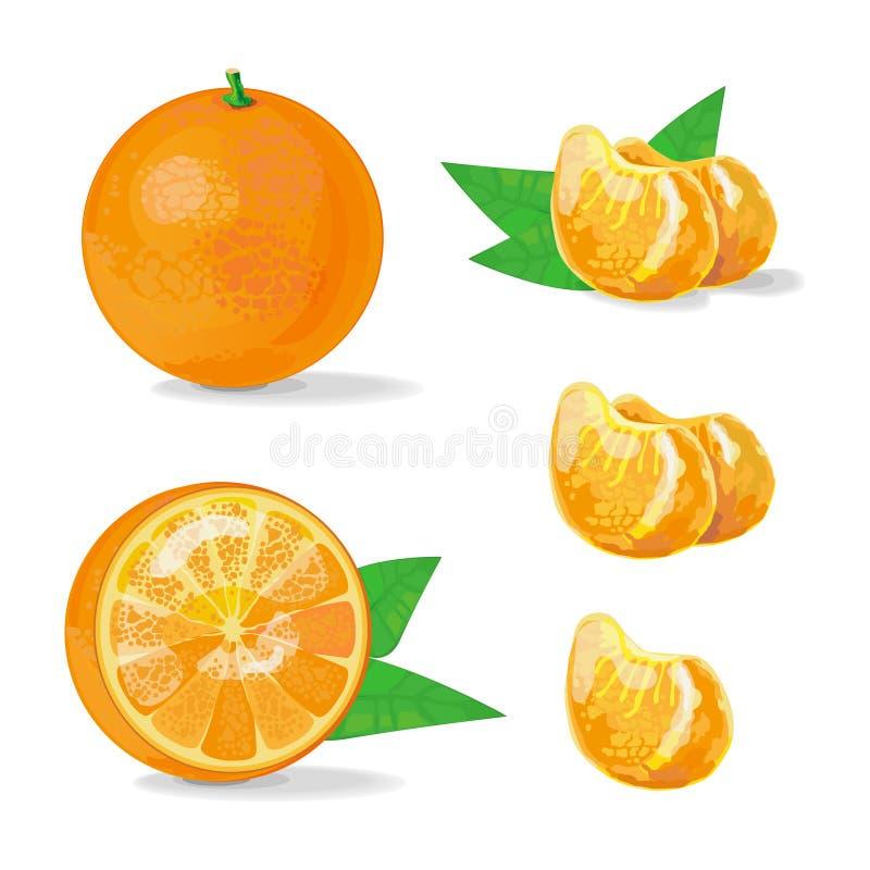 Composición de la naranja y de la rebanada Ejemplo de la fruta Ilustración del vector ilustración del vector