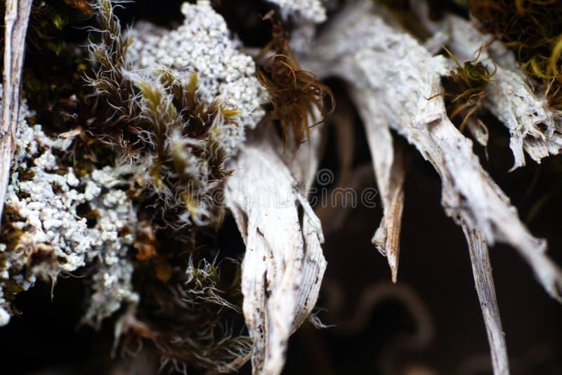 Composición de la planta: Musgos y liquenes de vida y troncos muertos imágenes de archivo libres de regalías