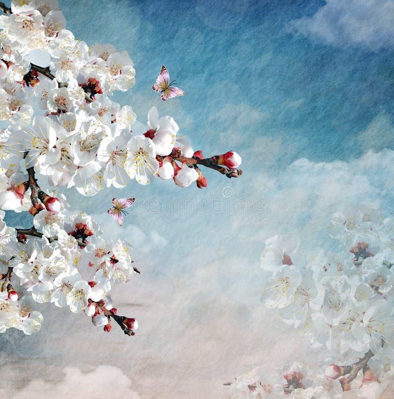 Composición de la primavera con las flores florecientes fotos de archivo