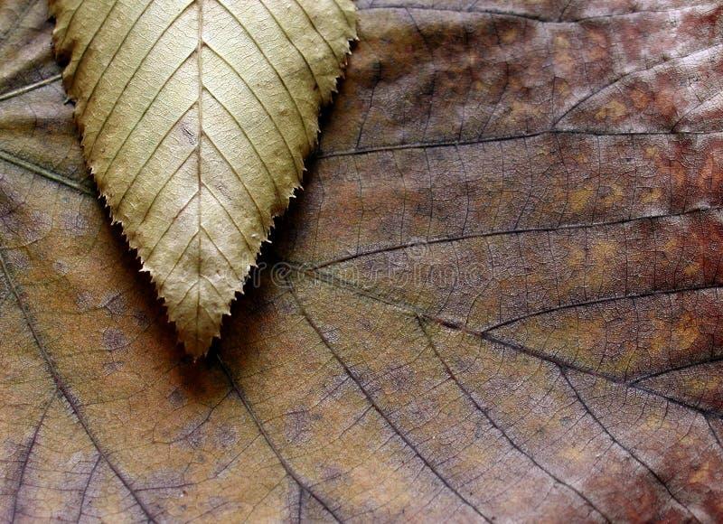 Composición de la textura de las hojas fotografía de archivo libre de regalías
