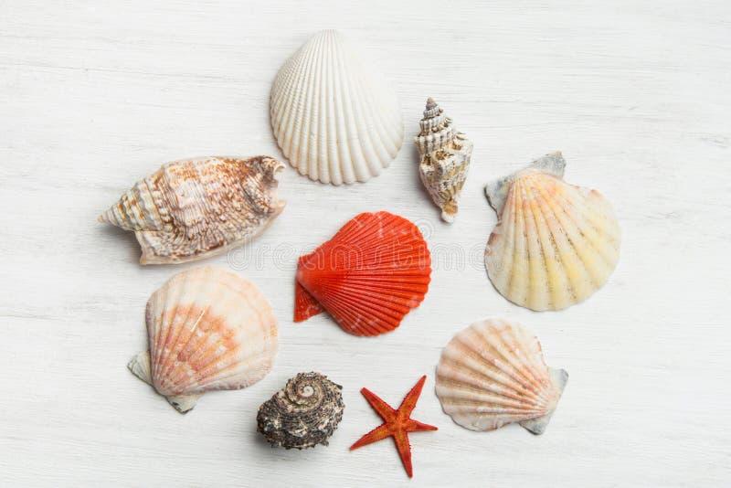 Composición de las diversas cáscaras del mar de diversos formas y colores en el fondo de madera blanco Endecha plana minimalista  fotografía de archivo