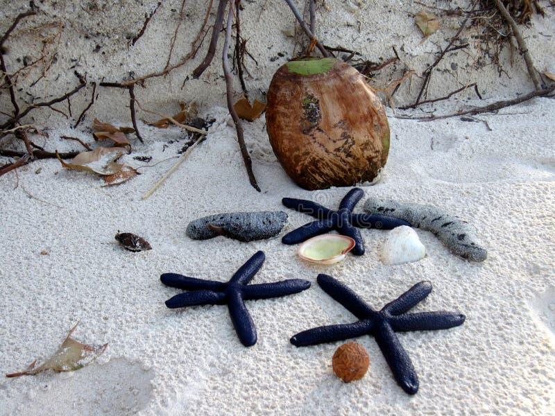 Composición de las estrellas de mar y del coco fotografía de archivo