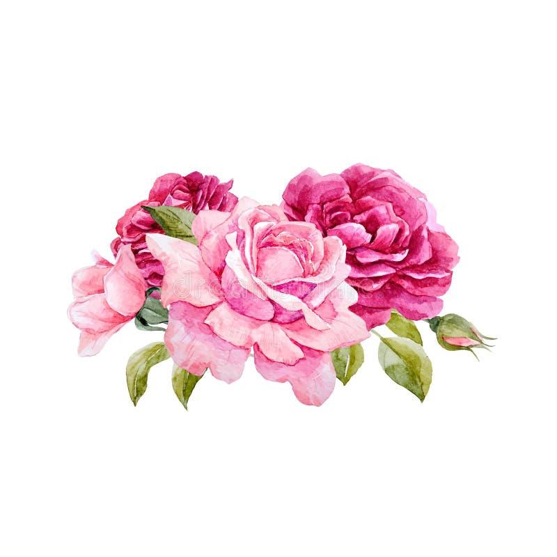 Composición de las rosas del vector de la acuarela ilustración del vector