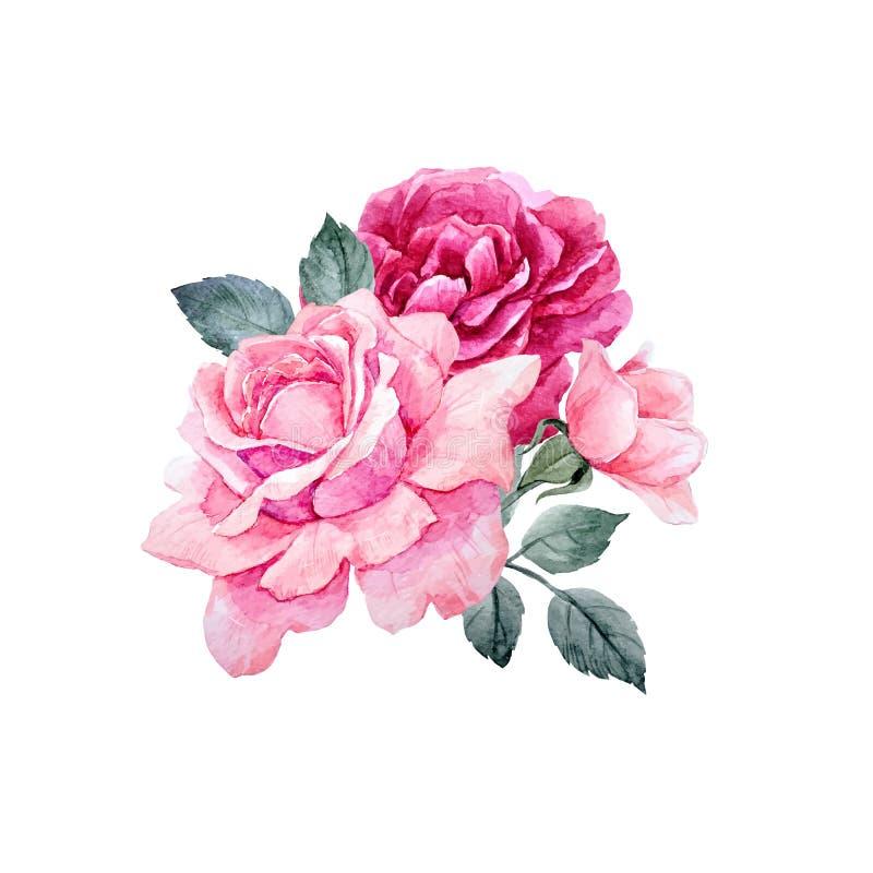 Composición de las rosas del vector de la acuarela stock de ilustración
